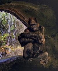 Gorilla pit